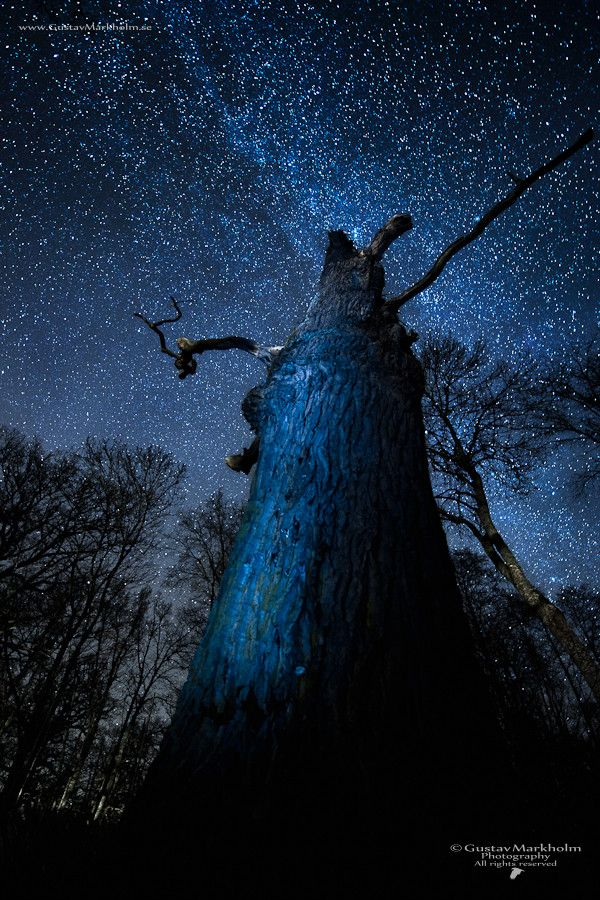 The oak and the nightsky by Gustav Markholm on 500px