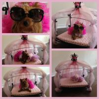 yorkie beds - 28 images - yorkie dog beds ...