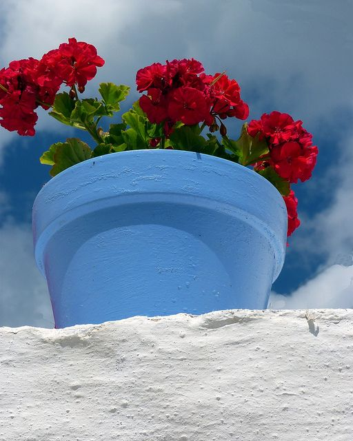 Blue pot with red geranium, Paros