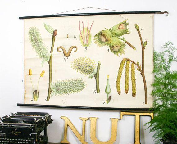 Botanical chart Hazelnut Genuine vintage school print Paper on linen, Copenhagen. £135.00, via Etsy.