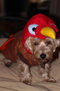 turkey costume for your Dog. | Best Friends Forever & Always
