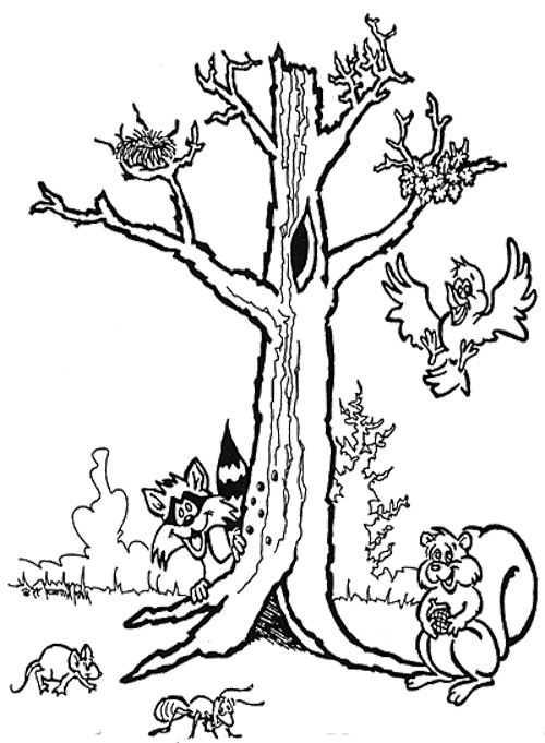 bare maple tree coloring pages coloring pages