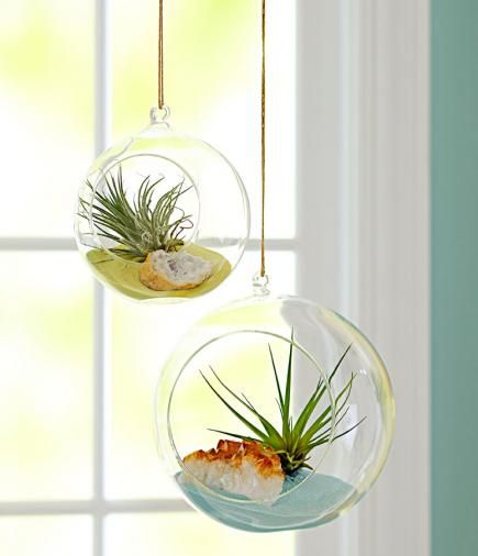 Airplants to add some life. Can add tea light candles or maybe herbs in the kitchen. I really want some of these!