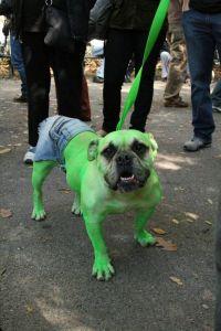 hulk-dog-halloween-costume