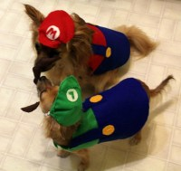 Mario And Luigi Dog Costumes Pictures to Pin on Pinterest ...