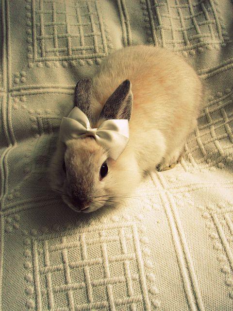 Lieve kleine bunny met strik