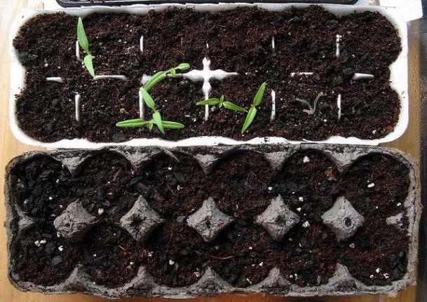 Contenitori per le uova per coltivare i semi