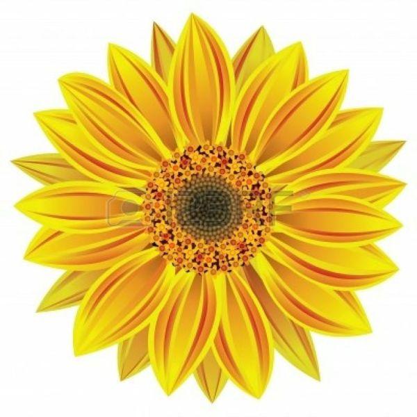 sunflower floral illustrations