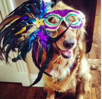 Mardi Gras Dog! | Mardi Gras | Pinterest