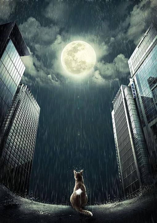 cat in the rain under a full moon