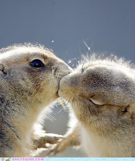 groundhog kisses.
