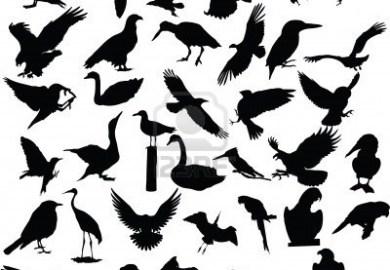 Animal Print Tattoo Designs