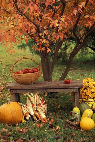 """Fall on the farm - 14 Photos of """"I walked on Paths of Crisp Autumn leaves"""""""