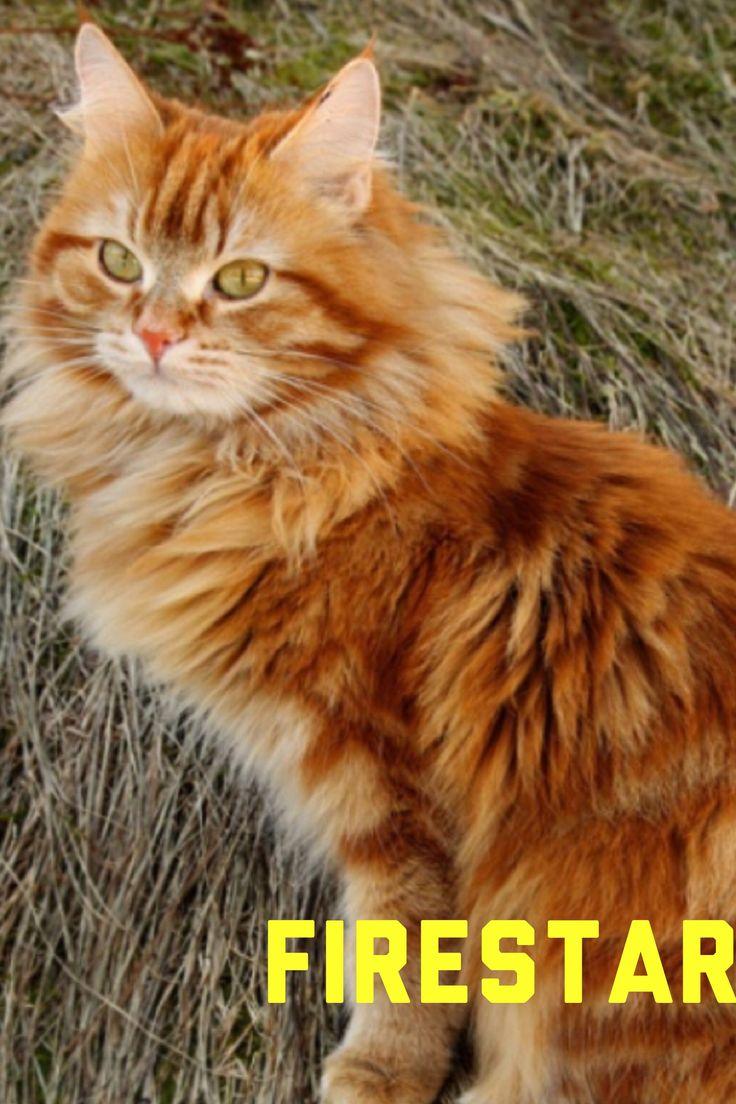 Warrior Cats Hunger Games