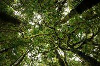 Rainforest Canopy.   Trees   Pinterest