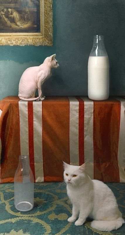 """Cat dreams"" (2009) by Russian photopainter Bodgan (Bono) Zwir"