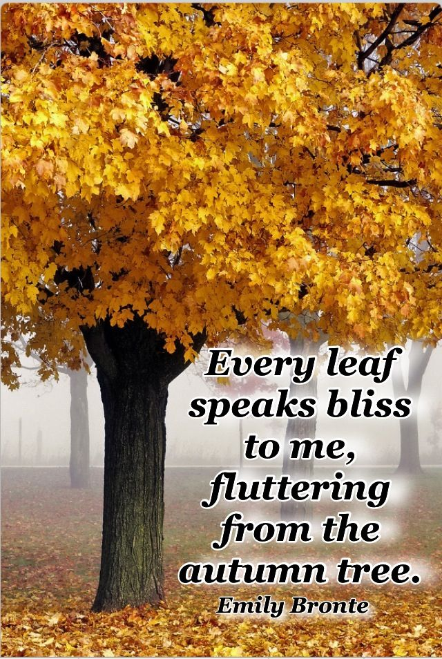 Don T Fall In Love Wallpaper Emily Bronte Autumn Quotes Quotesgram