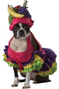 Dog in Carmen Miranda costume | Dogs in Costume | Pinterest