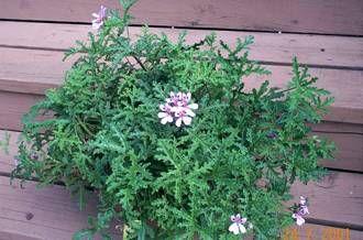 pin by helena watson on gardening pinterest