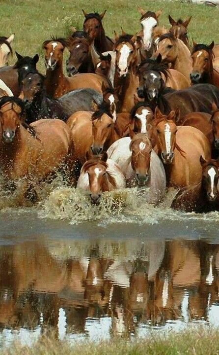 Reflection of a beautiful herd of horses.