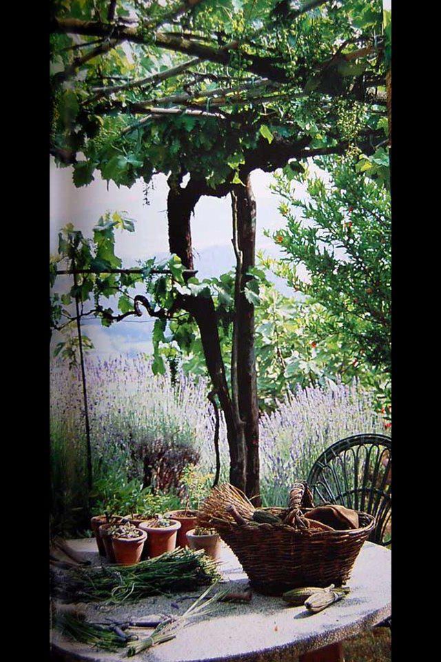 22 Unique Pergolas With Grape Vines  pixelmaricom