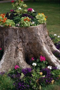 what to do with your tree stump | The crib | Pinterest
