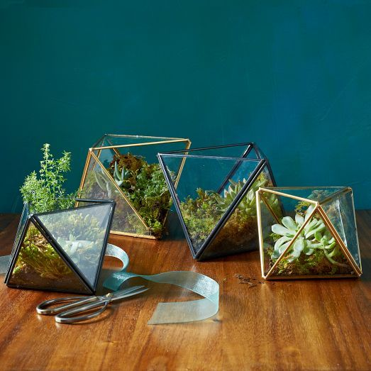 Faceted Terrariums | west elm