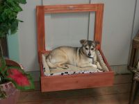 Even the dog gets a Murphy Bed!
