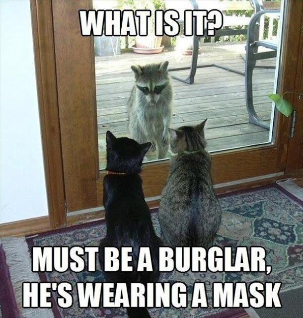 Must be a burglar...