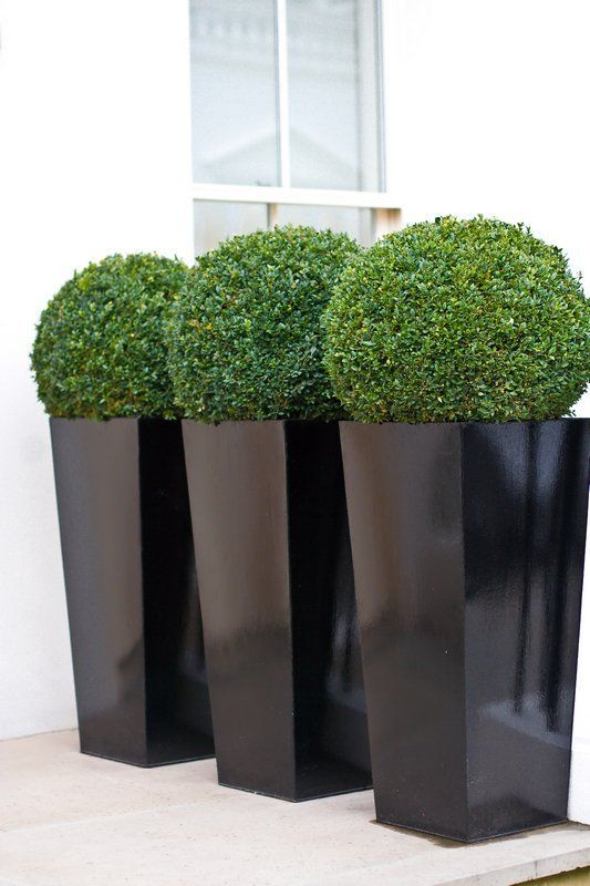 Contemporary Cubico planters in black gloss! Potted with the classic boxwood ball. For no maintenance and no watering why not opt for artificial. View here