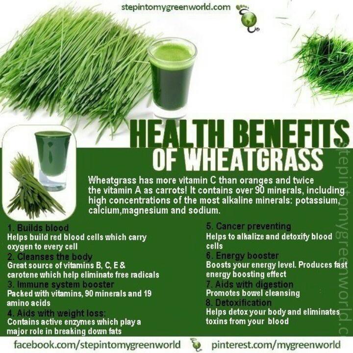 Wheatgrass benefits   health   Pinterest