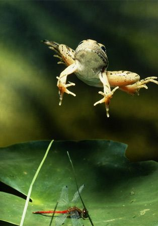 Photo: Jumping Frog - for Blog Hopping