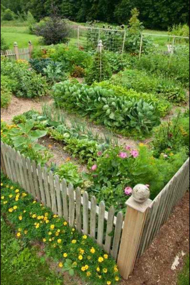 Beautiful vegetable garden  cottage vegetable garden  Pinterest