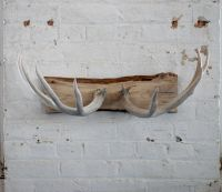 Naturally shed deer antler coat rack/jewelry holder/wall