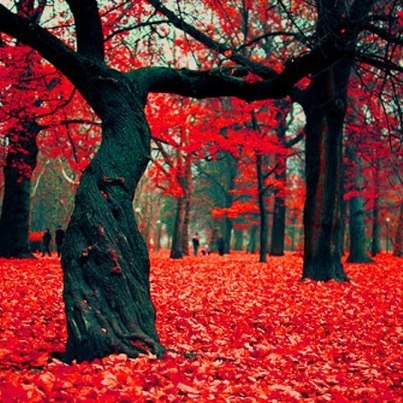 The Crimson Forest in Gryfino, Poland.......