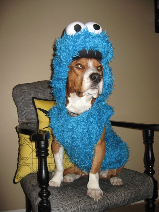 Dog Sesame Street Costumes
