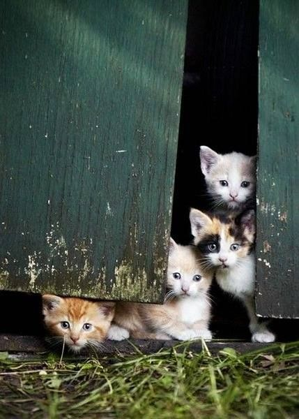 .A crowd of Kitties. www.superstarpetservices.com