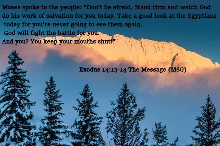 Exodus 14,13-14 The Message (MSG)