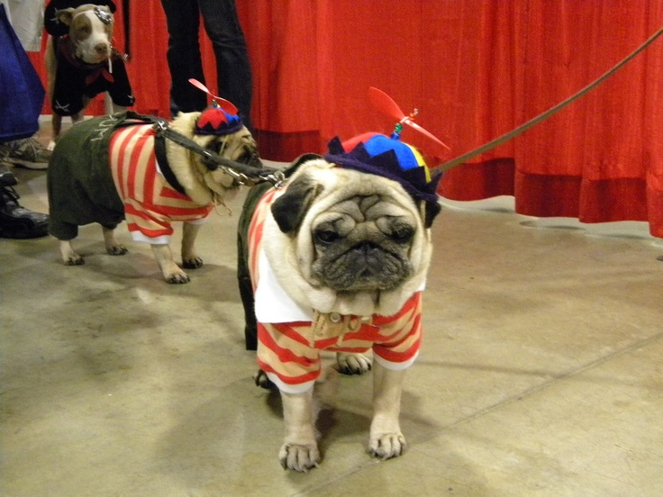 Twin pugs Tweedle Dee and Tweedle Dum PUGS!!! Pinterest