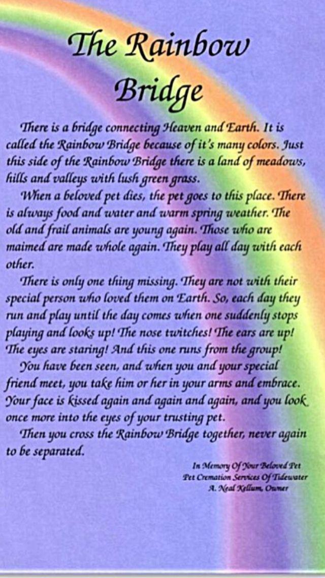 The Rainbow Bridge Dogs are Family,too Pinterest