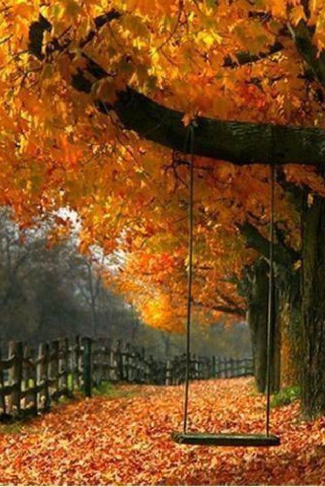 New England Fall Themed Wallpaper Must Read Mentor Text Who Do Leaves Change Colors Joy