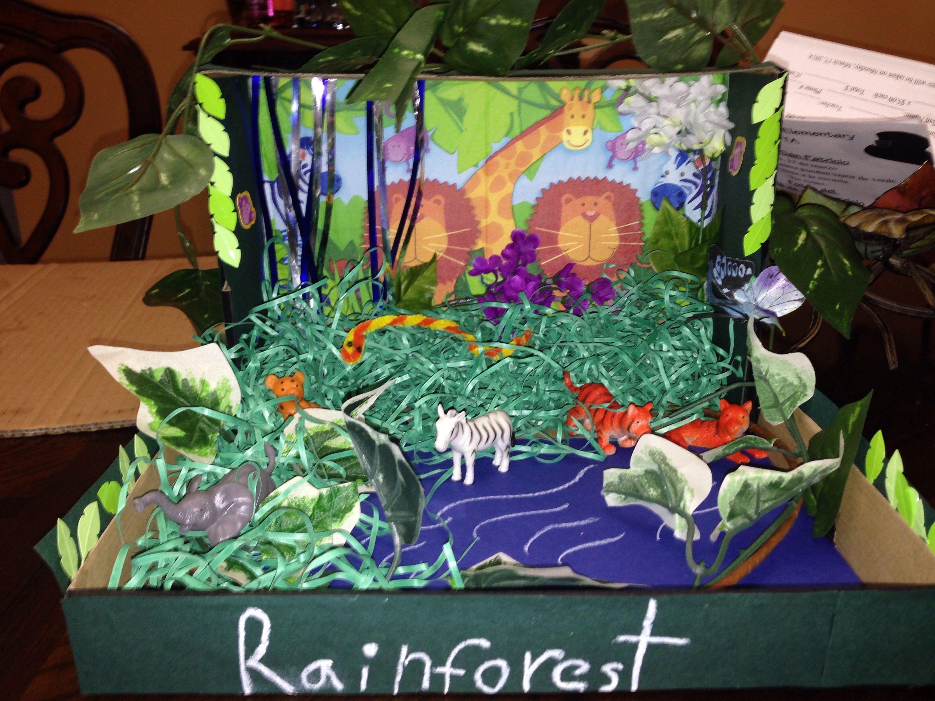 Rainforest Rainforest Habitat