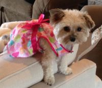 Cute puppy clothes | Our new puppy | Pinterest