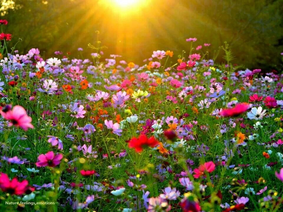Wildflowers in Sunshine | Gardens | Pinterest