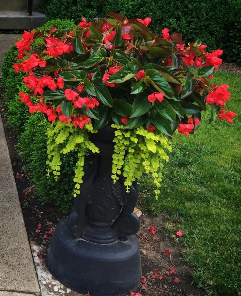 Container Flower Garden Ideas Photograph  Container Flowers