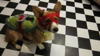 Ninja Turtles Raphael Dog Costume