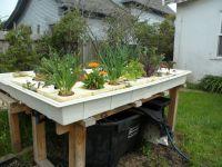 backyard aquaponics australia - 28 images - can aquaponics ...