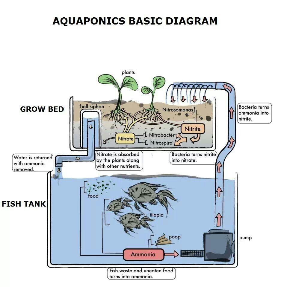 medium resolution of aquaponics aquaponics gardening pinterest