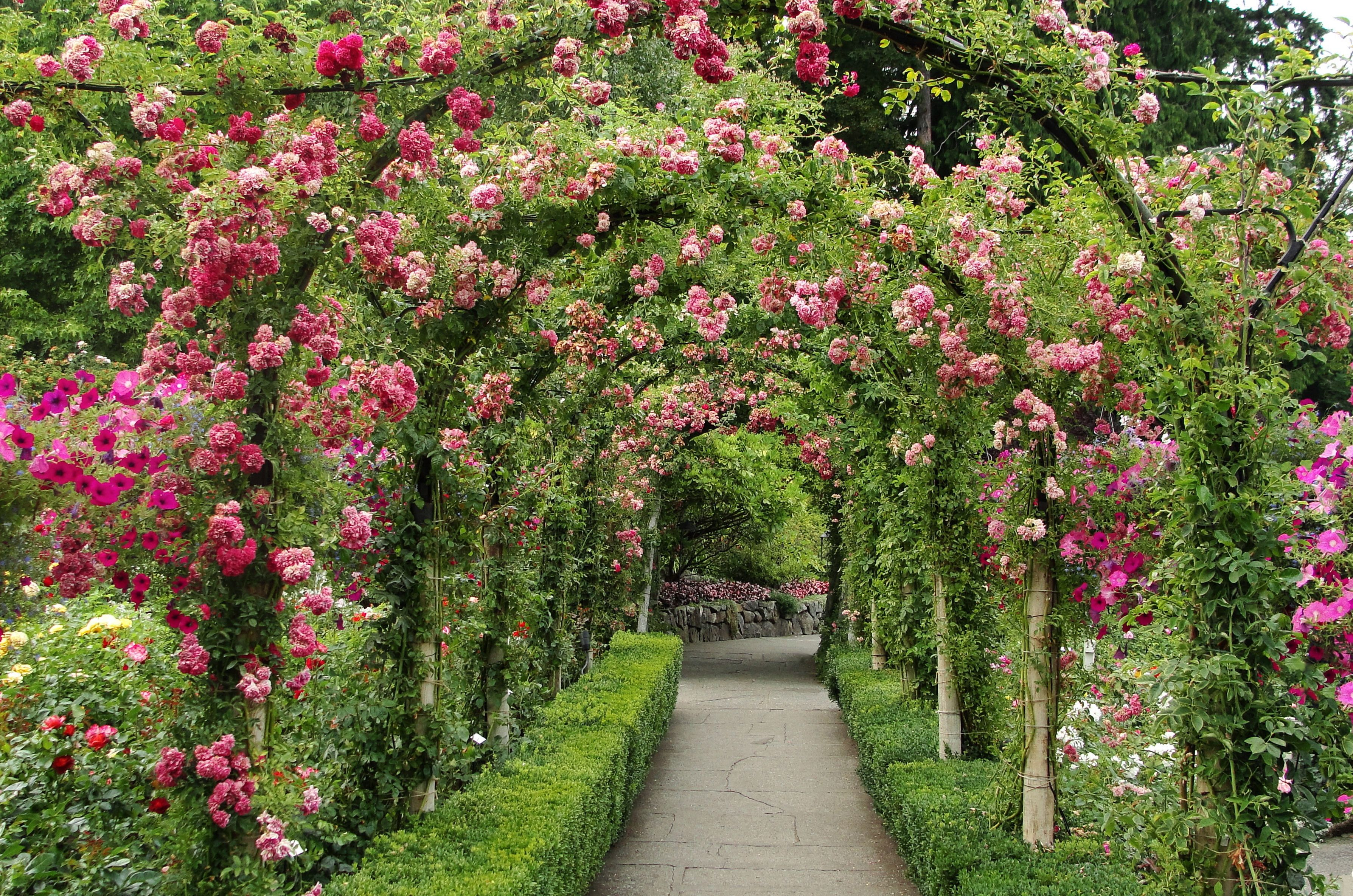 Rose Archway At Butchart Gardens Arrange To Send Flowers