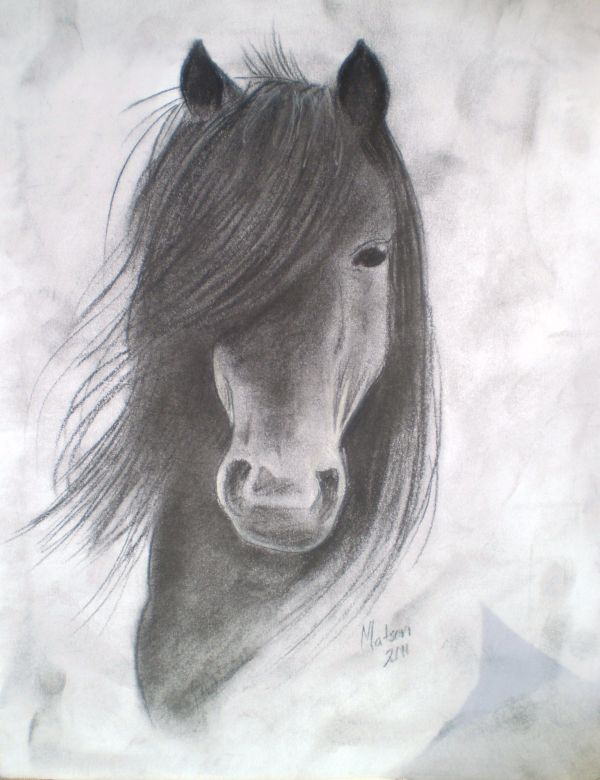 Charcoal Drawing Of Horse Art
